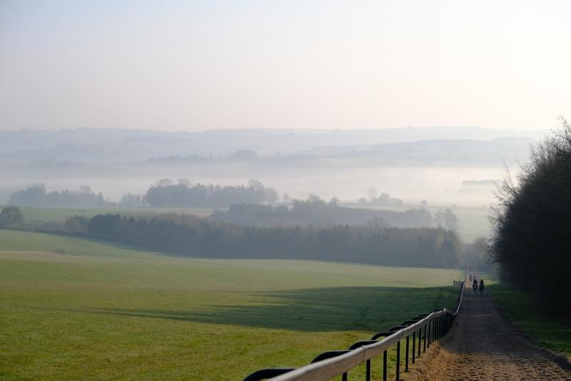 Gallops view