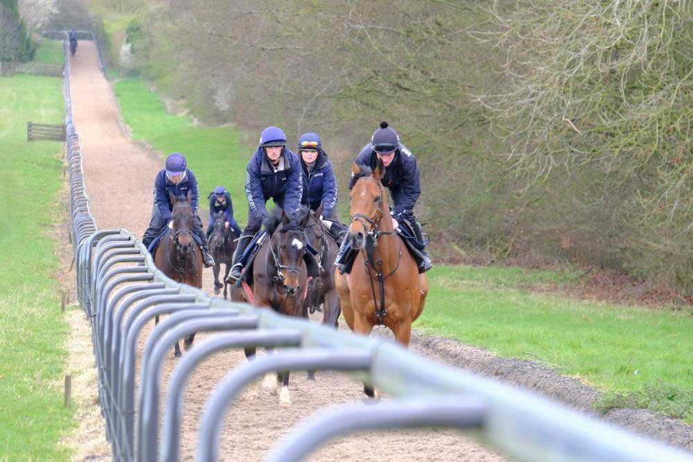 Horses on Gallops
