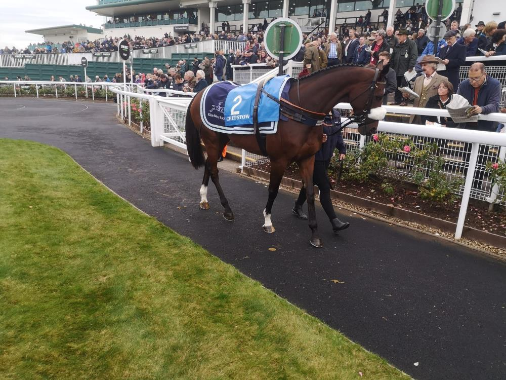 Charbel looking magnificent in the parade ring at Chepstow