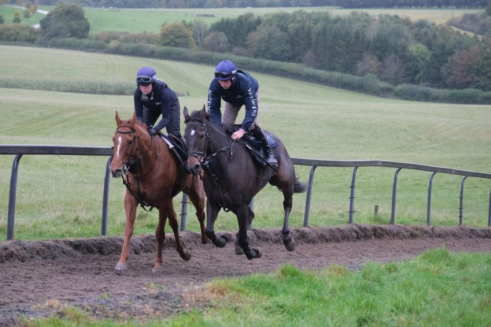 Another Venture and Minella Warrior